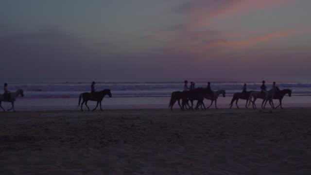 group of horses - cádiz stock videos and b-roll footage