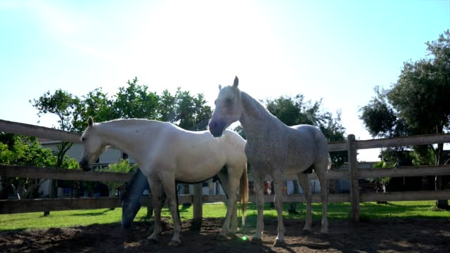 group of horses - group of animals stock videos & royalty-free footage