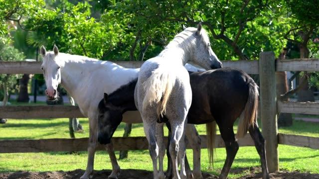 Groep van paarden