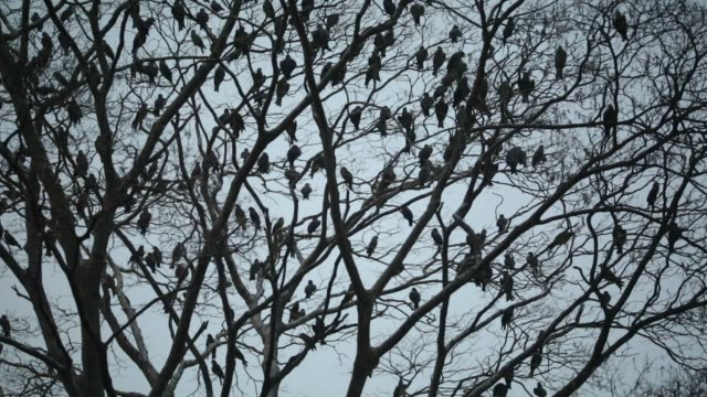 group of kestrel bird seen living on a tree - falcon bird stock videos & royalty-free footage