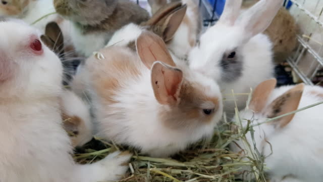 group of little rabbit on green grass in summer day - hay texture stock videos & royalty-free footage