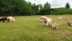 Group of lovely puppy playing outdoor,4k