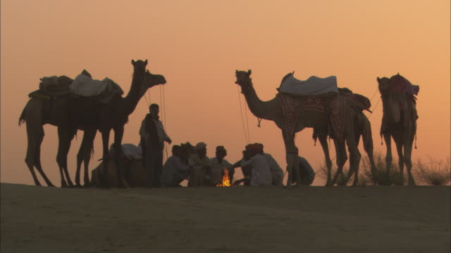 MS, group of men and camels around fire on desert at sunset, Rajasthan, India