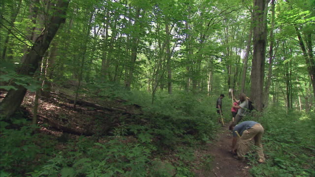 ws group of men clearing trail in forest with pickaxes and hoes / rutland, vermont, usa - sentiero video stock e b–roll