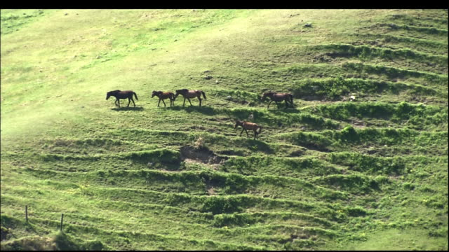 a group of misaki horses walking across the hill. - hill stock videos & royalty-free footage