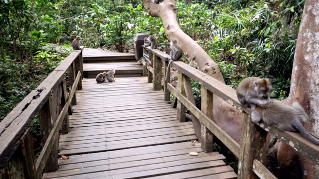 group of monkes lying down in a bridge in uluwatus monkey forest - {{asset.href}} stock videos & royalty-free footage
