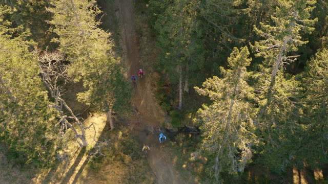 AERIAL Group of mountain bikers riding through forest