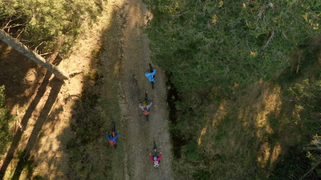 AERIAL Group of mountain bikers riding through the forest in sunshine