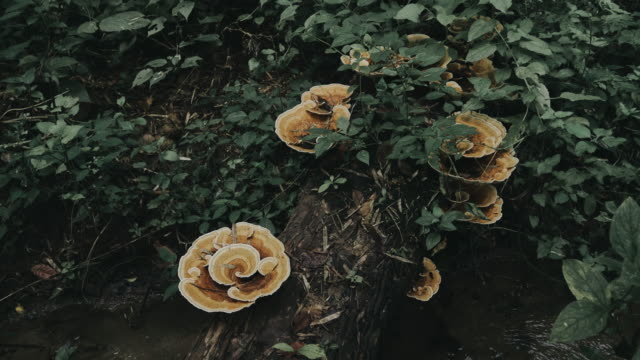 group of mushroom in the forest - stock video - fly agaric stock videos and b-roll footage