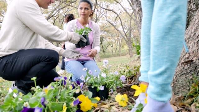 A group of neighbors plant pansies in their neighborhood park