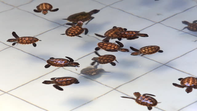 Group of newborn turtle in the water