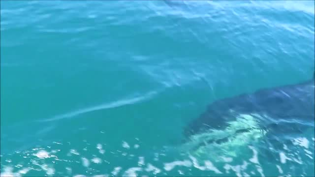 vídeos de stock, filmes e b-roll de group of orcas cruised around a jet ski off kaikoura peninsula, northeast of new zealand's south island, on february 15. david lyons, who runs a surf... - kaikoura
