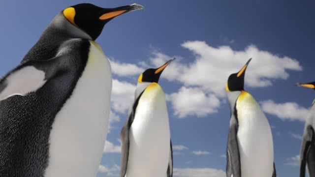 group of penguins looking at one another - penguin stock videos & royalty-free footage