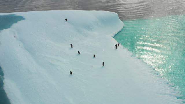 group of penguins on the gracier in antartica - south pole stock videos & royalty-free footage