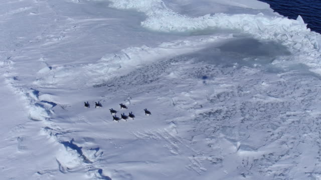group of penguins sliding on belly / antarctica - polar stock videos & royalty-free footage