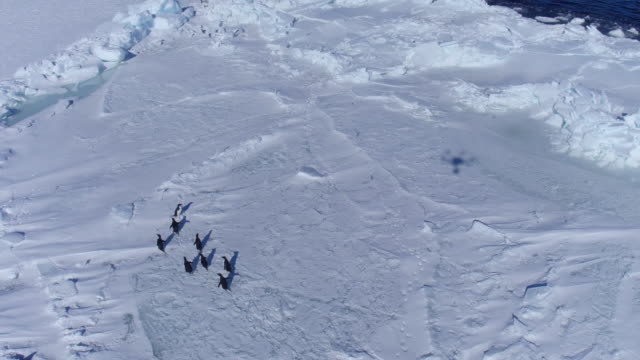 group of penguins sliding on belly / antarctica - antarctica iceberg stock videos & royalty-free footage