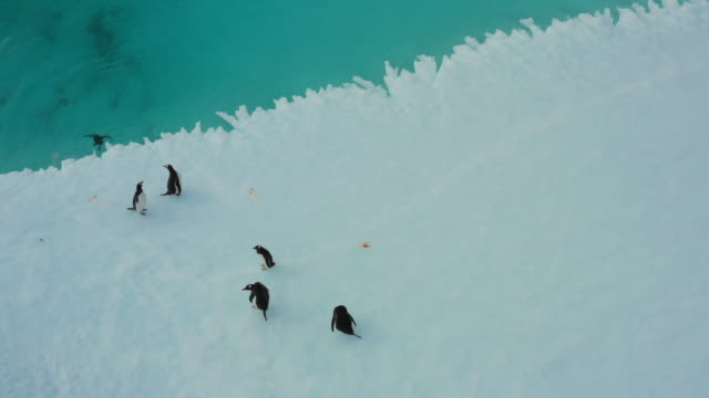 group of penguins swimming around a glacier / antartica - icecap stock videos & royalty-free footage