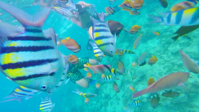 Group of people give food to colorful fishes in the Gili islands during snorkeling trip during travel vacations.