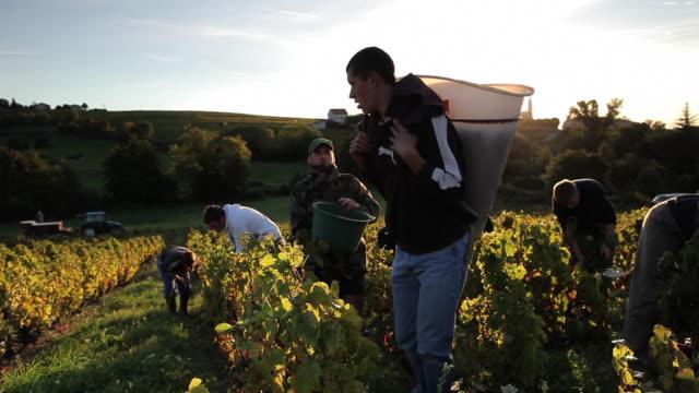 vídeos y material grabado en eventos de stock de group of people harvesting grapes - viña