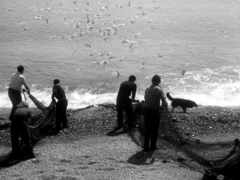 group of people haul in a fishing net, full of mackerel. 1956. - 1956 stock-videos und b-roll-filmmaterial