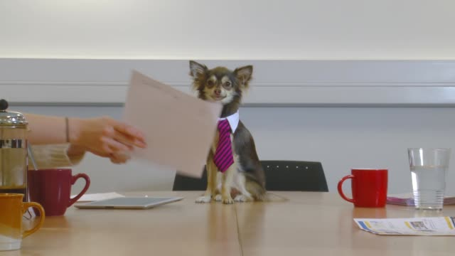 Group of people have meeting with office dog
