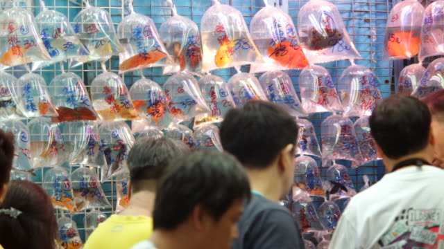 ms group of people looking at fish in plastic bags on wall in market / hong kong, china - petshop stock videos and b-roll footage