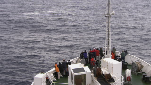 ms, ha, group of people on ship looking at bowhead whales (balaena mysticetus) swimming in ocean, antarctica - 2007 stock videos & royalty-free footage