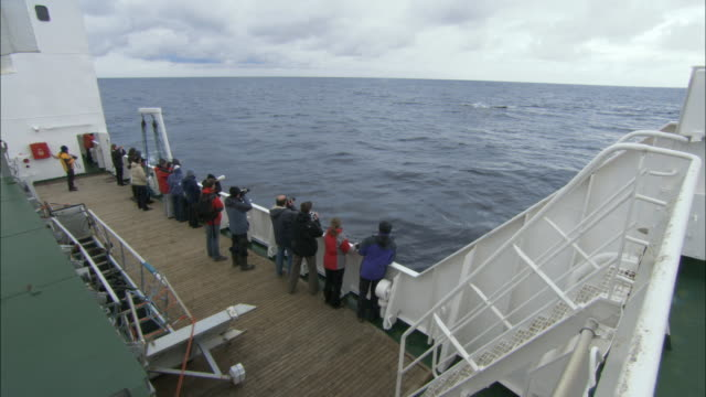 ms, ha, group of people photographing bowhead whale (balaena mysticetus) swimming in ocean from ship, antarctica - whale watching stock videos and b-roll footage