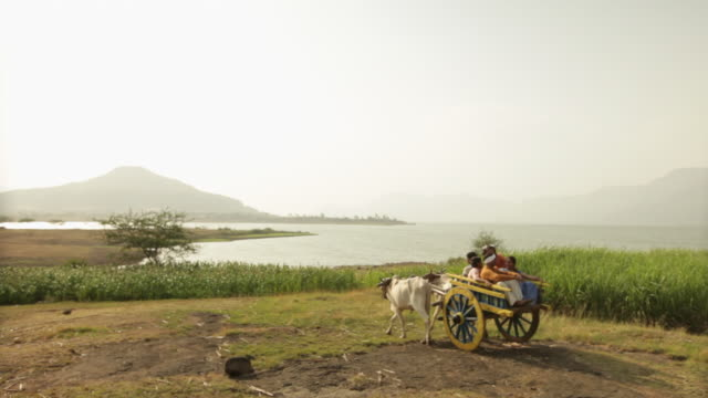 group of people sitting on a ox cart in a farm  - ox cart stock videos & royalty-free footage