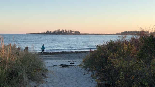 group of people walking at crescent beach near cape elizabeth, maine usa during autumn - region new england stock-videos und b-roll-filmmaterial