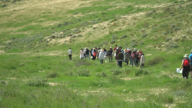 group of people walking in green pasture, in the negev desert at winter. - negev stock videos & royalty-free footage