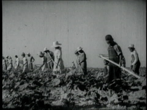 1940 ms group of people working a farm field / united states - sharecropper stock videos & royalty-free footage