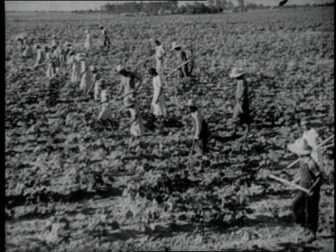 1940 ws group of people working a farm field / united states - sharecropper stock videos & royalty-free footage