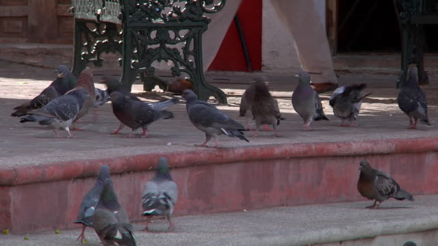 group of pigeons walking in the square - roof stock videos & royalty-free footage