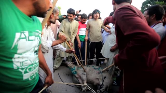 A group of protesters drag a pig 'Go Nawaz Go' is written on along a road during the ongoing antigovernment protest in Islamabad's Red Zone where the...