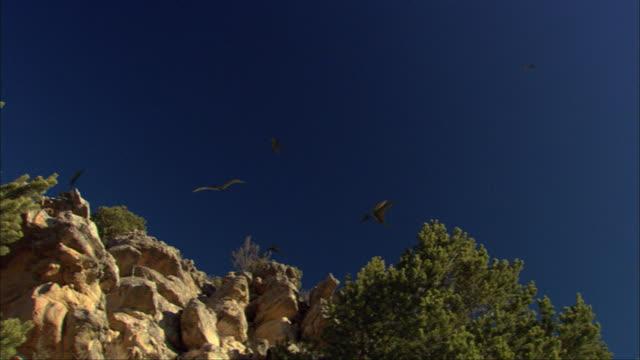 CGI, MS, LA, PAN, Group of Pterosaurses  flying above rocky landscape