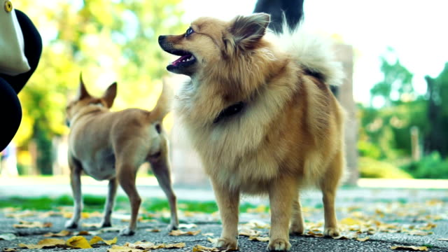 Group of purebred dogs in park