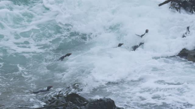 vídeos y material grabado en eventos de stock de slomo ha group of rockhopper penguins swimming to land in heavy surf but then wiped out by huge waves - grupo mediano de animales