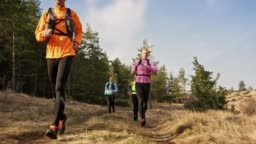 Group of runners running on a grassy mountain trail along a forest on a sunny day in spring