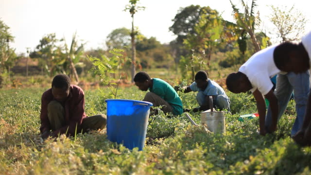 Group of rural African farmers working in garden