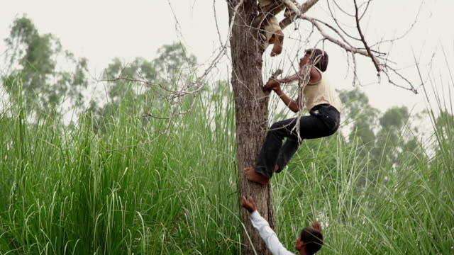 group of rural boys climing a tree, haryana, india - haryana stock videos & royalty-free footage