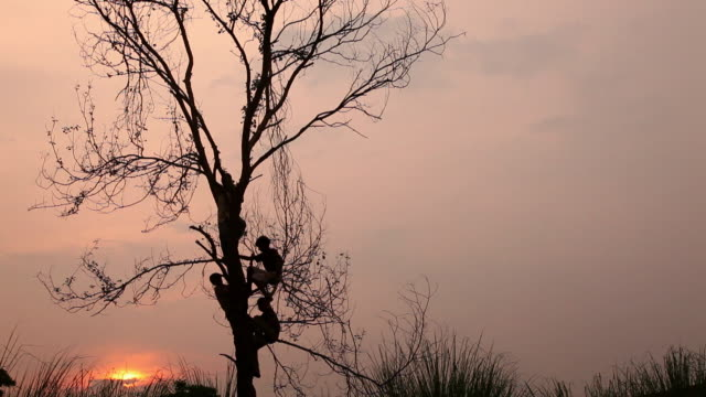 Group of rural kids climing a tree, Haryana, India