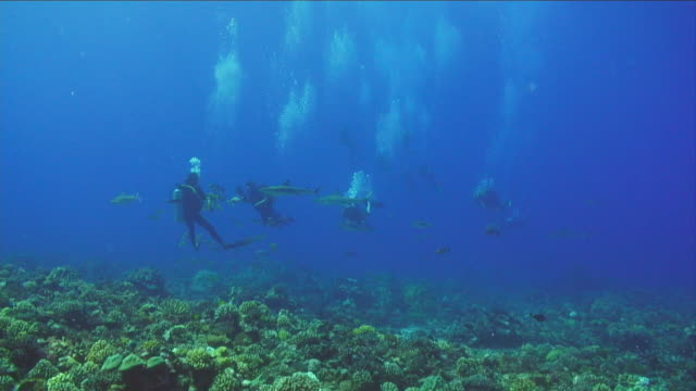 vidéos et rushes de ws, group of scuba divers swimming around coral reef, moorea island, tahiti, french polynesia - dom tom