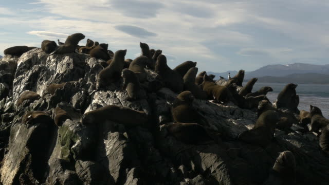 Group of sea lions standing over the rocks