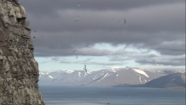 a group of seabirds soar in front of cliffs in miller's camp in svalbard, norway. - svalbard and jan mayen stock videos & royalty-free footage