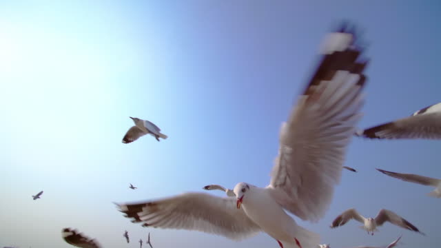 slo mo group of seagull bird flying on the blue sky - flock of birds stock videos & royalty-free footage