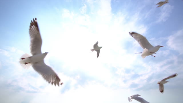 slo mo group of seagull bird flying on the blue sky - flapping wings stock videos & royalty-free footage