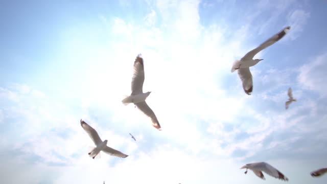 vídeos de stock e filmes b-roll de slo mo group of seagull bird flying on the blue sky - céu claro