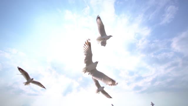 青空を飛ぶカモメの鳥のslo moグループ - seagull点の映像素材/bロール