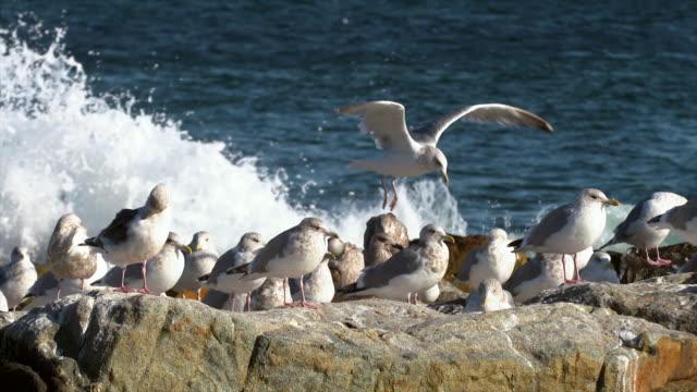 group of seagulls at beach / yeongdeok-gun, gyeongsangbuk-do, south korea - south pacific ocean点の映像素材/bロール